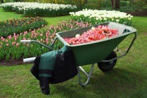 Kertész, kertépítő tanfolyam