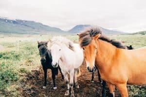 Állatgondozó - lovak