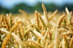 Mezőgazdaság szakmacsoport