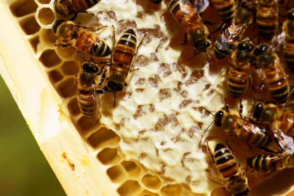 Méhész OKJ tanfolyam