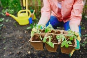 dísznövénykertész felnőttképzés