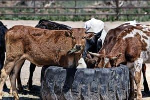 állattenyésztő tanfolyam